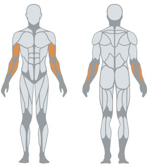 ALTERNATE ARM CURL